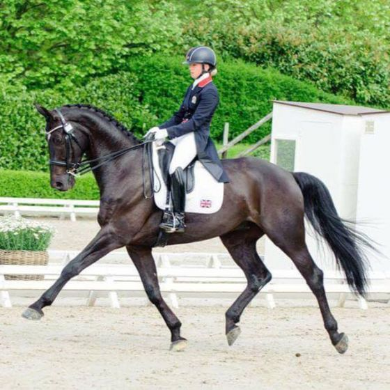 Five Traits to Look for when Buying a Dressage Horse