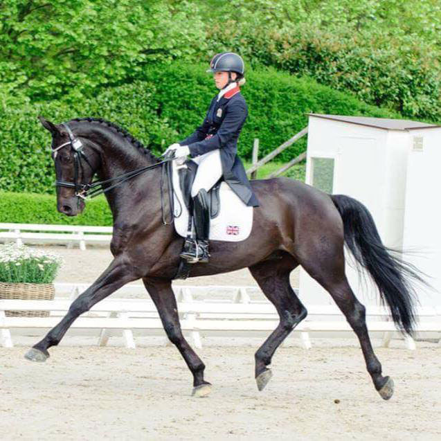 Find A Dressage Horse